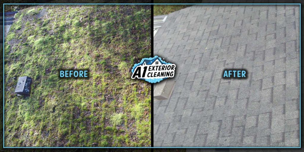 Carpet moss can cause extensive damage to your shingles, such as pitting and shingle rot.
